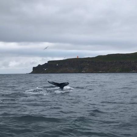 ballena infiel